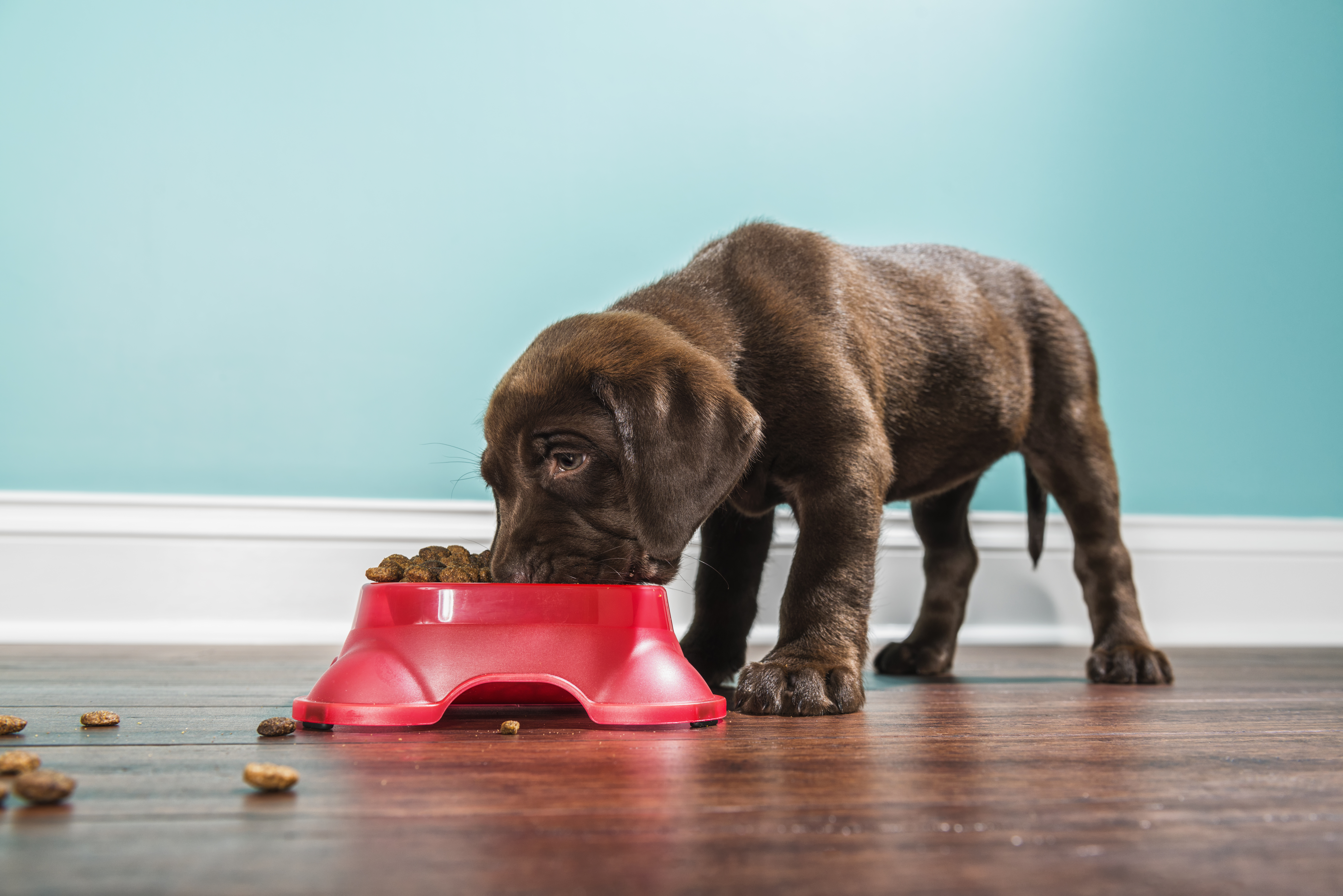 Dog Food Sold In Canada Recalled Over Potential Toxic Vitamin D Levels National Globalnews Ca
