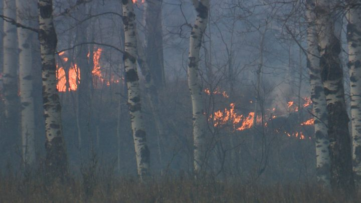 Heavy winds contributed to two grass fires burning near Pincher Creek on Saturday.