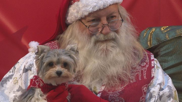 Pups posed with Santa for photos on Sunday in Calgary.