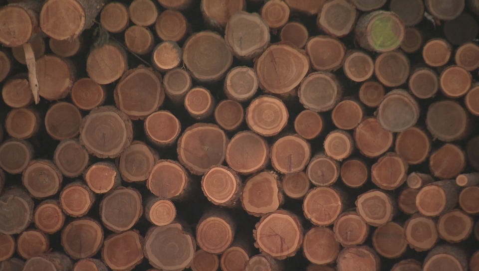 Nova Scotia to provide $10 million for new forestry sector rebate program - image