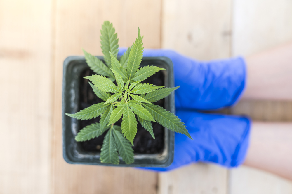 Spiritleaf, a cannabis company based out of Alberta, has expressed interest in opening a cannabis retail store in Kingston.