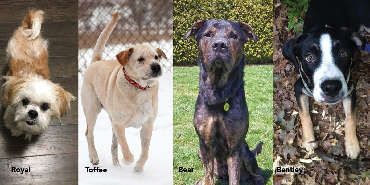 The Guelph Humane Society provided an update on four dogs that were brought into their care in 2018.