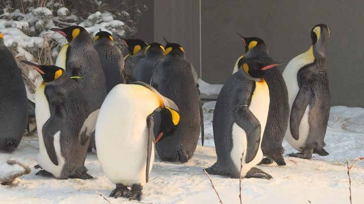 Calgary Zoo Brings Animal Facts Videos To Those At Home During Coronavirus Pandemic Calgary Globalnews Ca