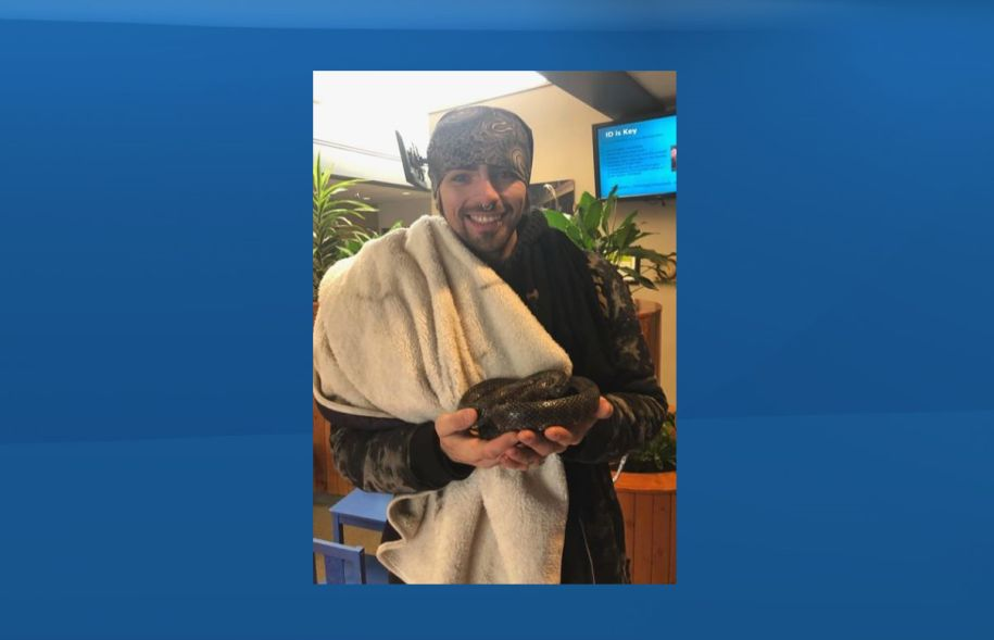 Jay Taylor is reunited with his pet California king snake in Edmonton. Feb. 2019.