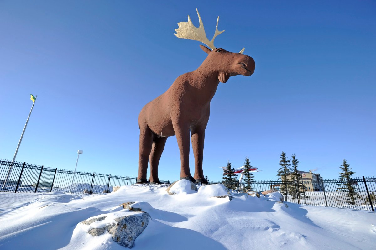 Mac the Moose, pictured in Moose Jaw, Sask., on Tuesday, Feb. 25, 2019.