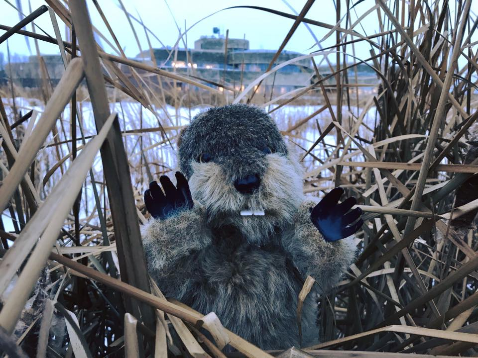 Manitoba Merv says spring will make an early appearance in 2019.