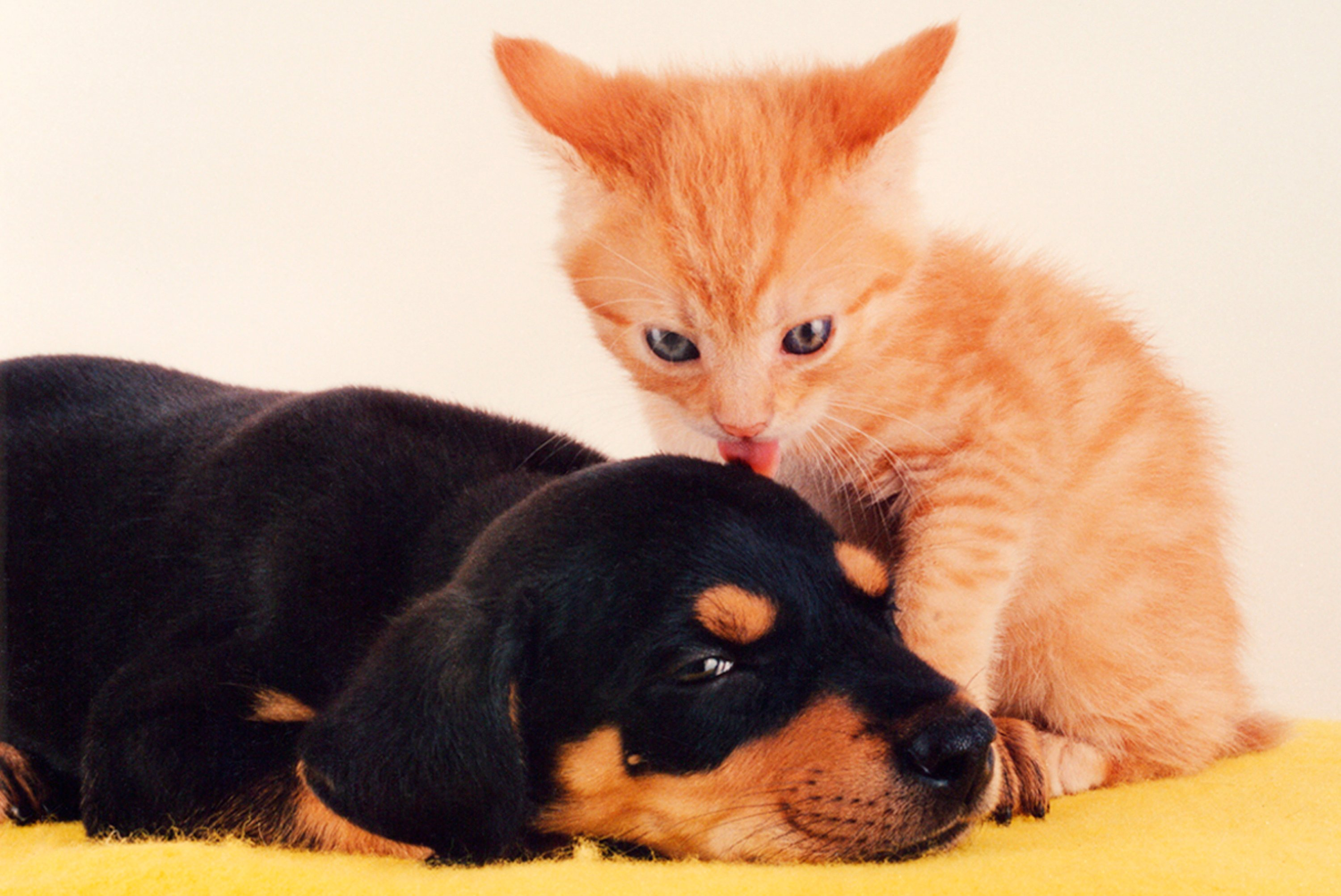 FILE: A puppy and a kitten pose together.