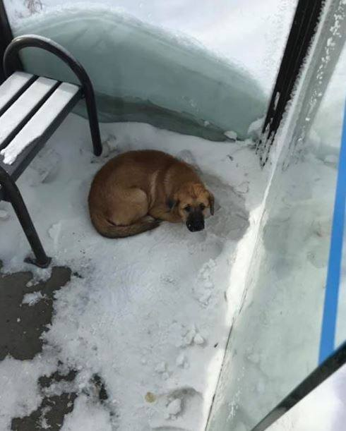 A small dog was discovered shivering in a Regina bus shelter on Wednesday afternoon.