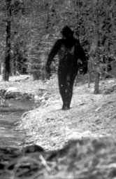 Continue reading: Nighttime podcast recap: Was it a Sasquatch in Pictou County, N.S.?