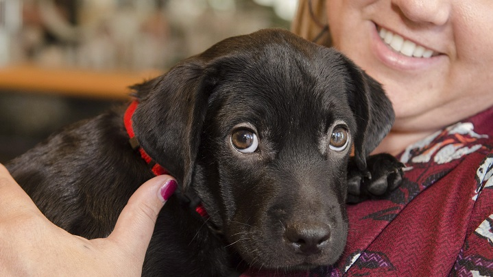 CNIB is looking for volunteers to help raise their puppies into guide dogs for the visually impaired.
