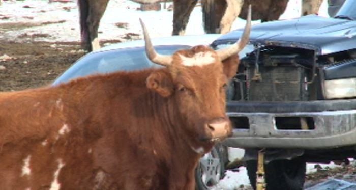Fire destroyed a rural home in the North Okanagan on Friday, and now animal advocates are concerned about the animals at the ranch.