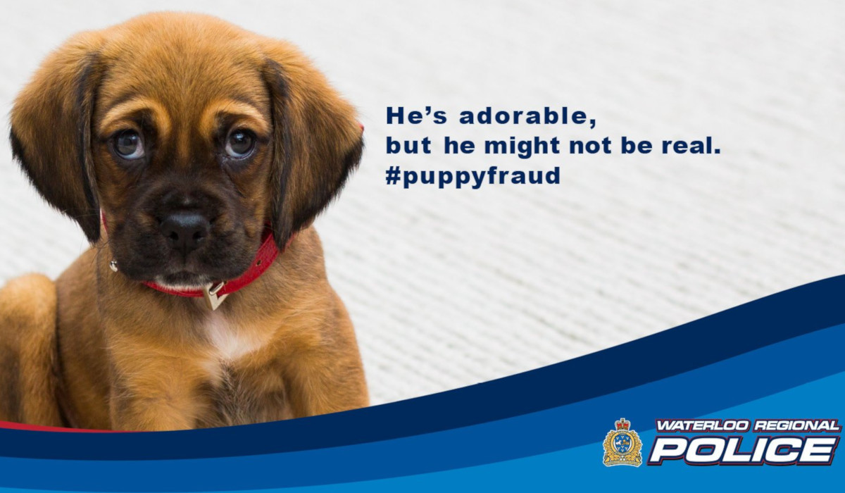 Waterloo Regional Police are warning the public of several online scams, including one involving puppies.