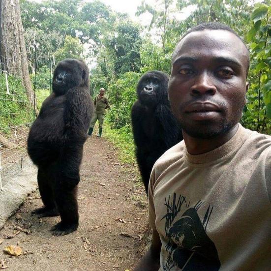 Caretakers at Virunga National Park take a selfie alongside two gorillas, posing like people in the Democratic Republic of the Congo.