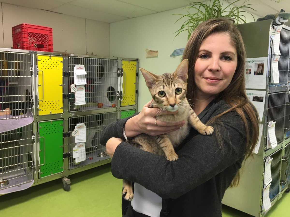 The Montreal SPCA is demanding the Quebec Order of Veterinarians ban the practice of declawing cats.