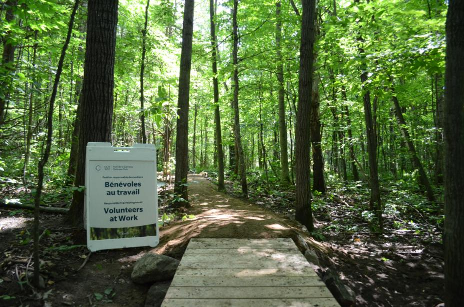 Right now, the number of unofficial trails in Gatineau Park exceeds the total number of official ones.