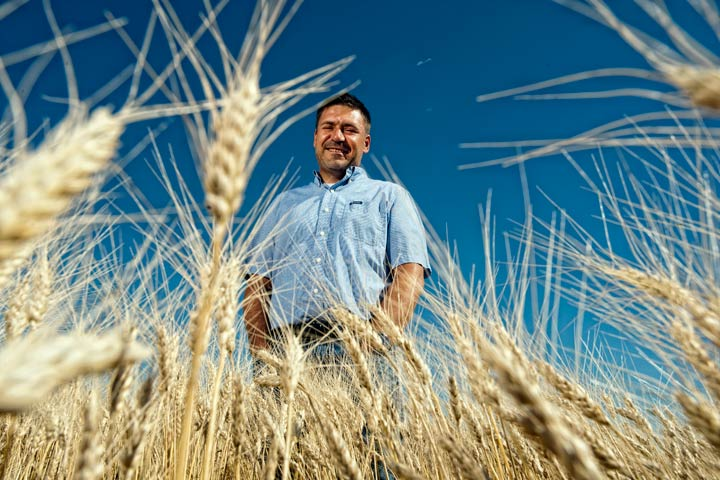 U of S scientist Curtis Pozniak helped identify the gene in durum wheat responsible for the accumulation of cadmium, a toxic heavy metal found in many soils.