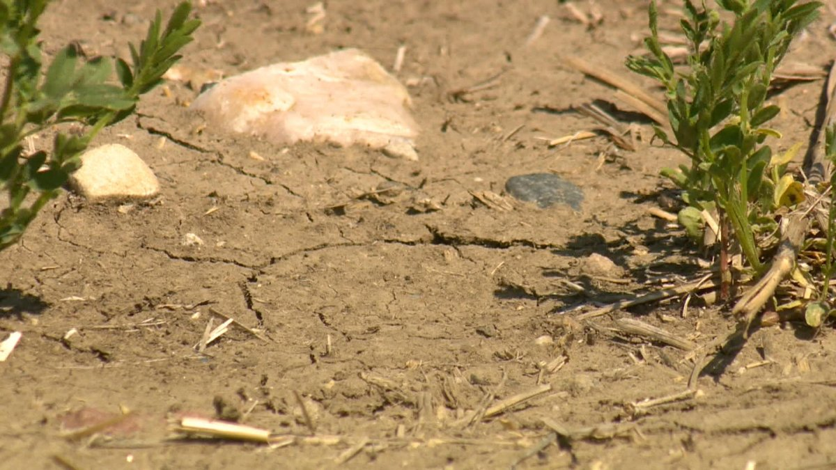 Very little precipitation in the province in the last week have worsened topsoil moisture conditions, reported Saskatchewan Agriculture.