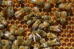 Continue reading: World Bee Day: How beekeepers are keeping the pollinating buzz alive