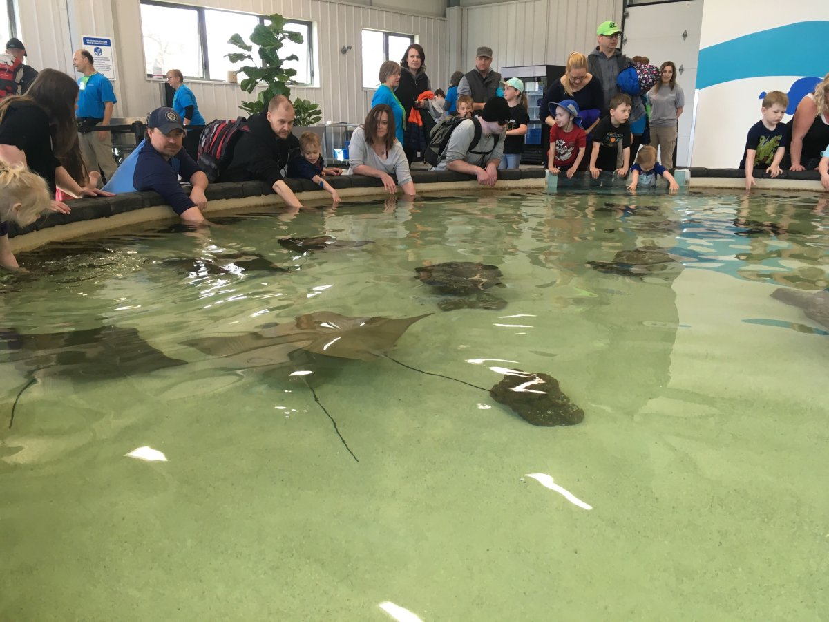 Visitors at Assiniboine Park Zoo crowded around the zoo's new 'Stingray Beach' exhibit.
