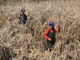 Continue reading: Winnipeggers explore biodiversity in wetlands at Oak Hammock Interpretive Centre