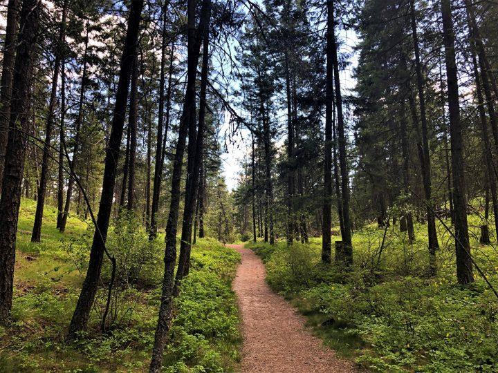 A hiking trail on Mount Boucherie. The City of West Kelowna issued two tweets on Friday about bear and cub sightings on Mount Boucherie and the Rose Valley trail systems.