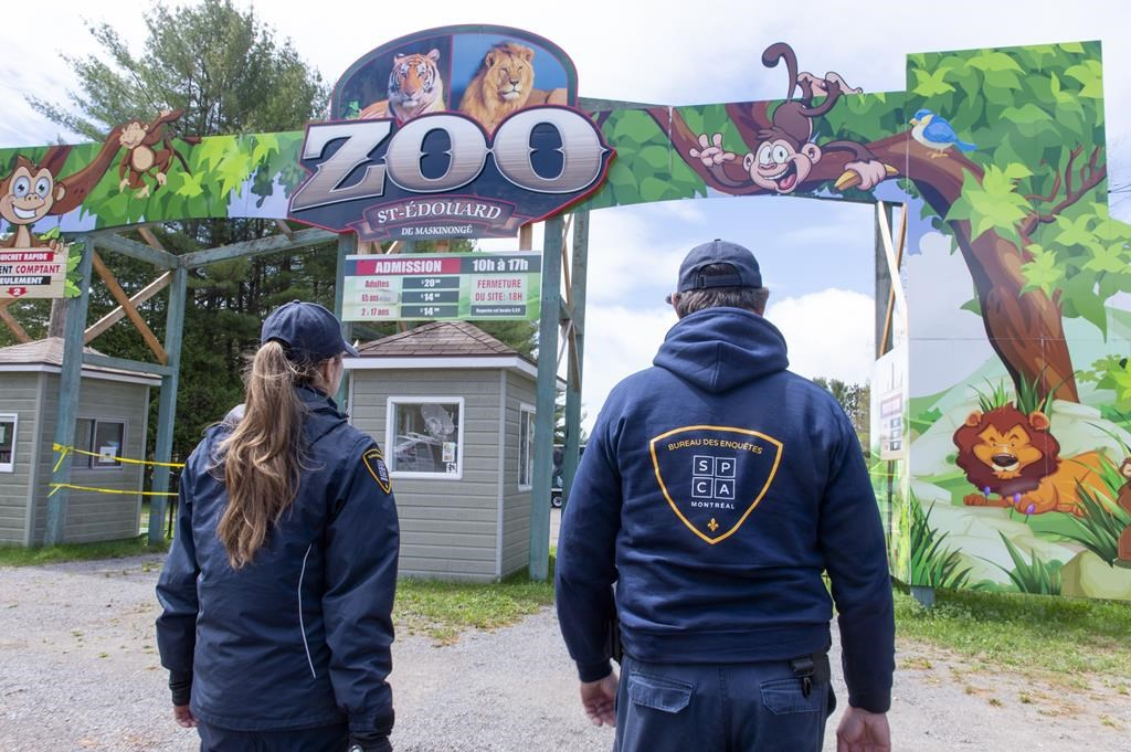 Society for the Prevention of Cruelty to Animals officers enter a zoo where the owner of the zoo was arrested on charges of cruelty to animals in St-Edouard-de-Maskinonge, Que. on Tuesday, May 21, 2019.