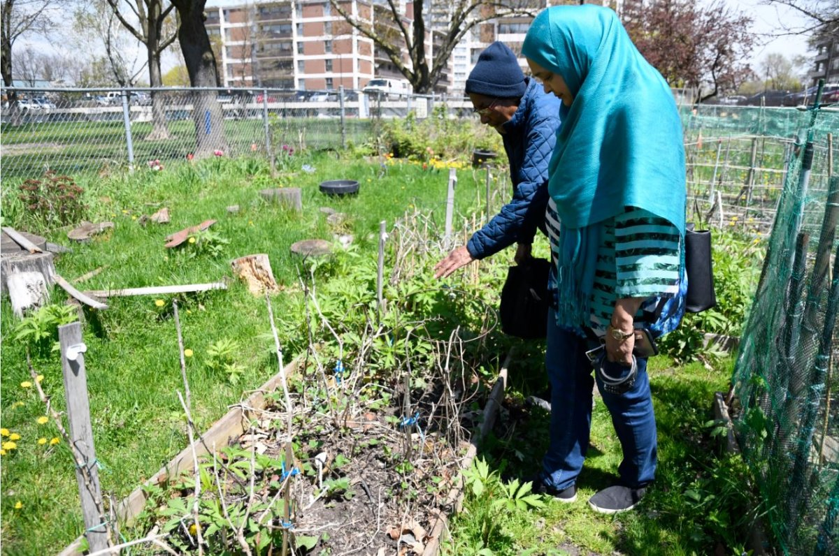 Sabina Ali (right) and Alice Cariman of the Thorncliffe Family Garden in Toronto.