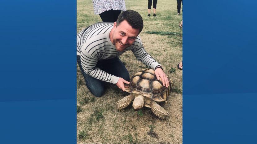 Large Tortoise Found Wandering Along Northern Alberta Road Globalnews Ca