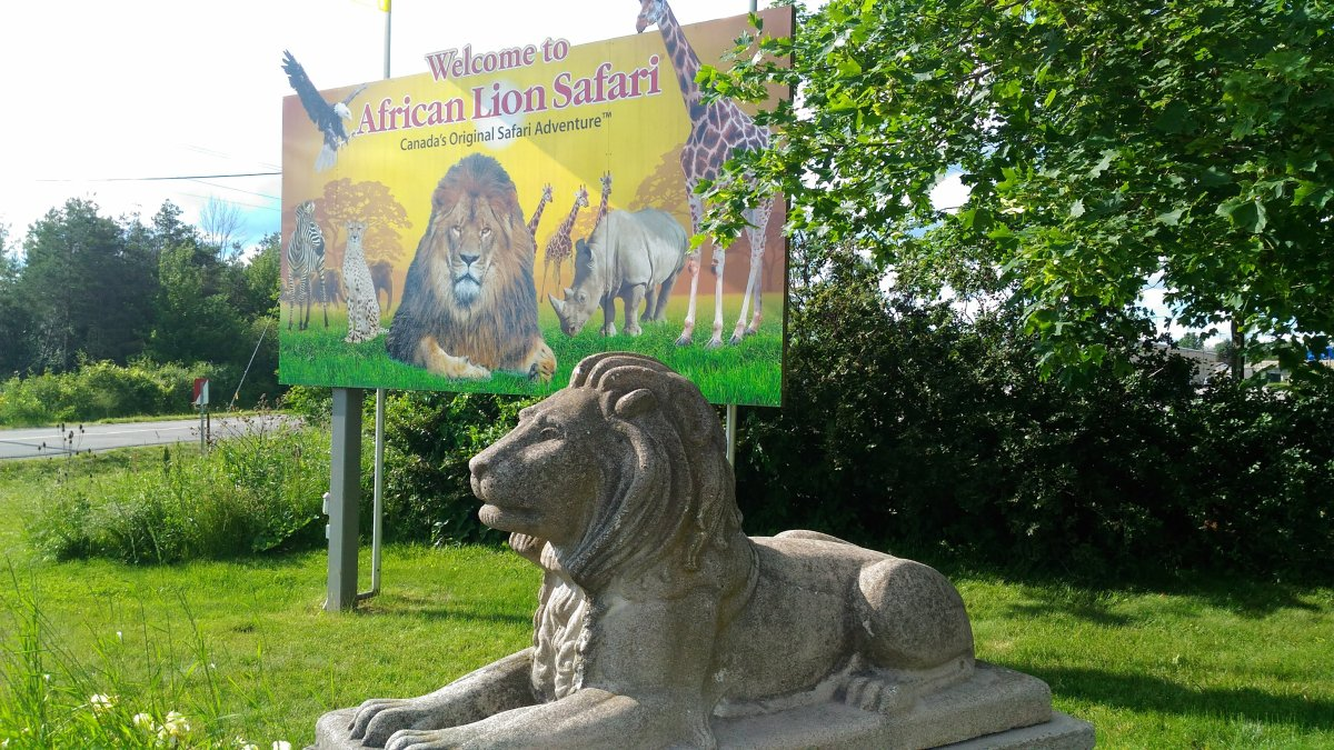 Directors from two different animal welfare organizations weighed in on the prospect of riding a wild animal at a private park on Monday.