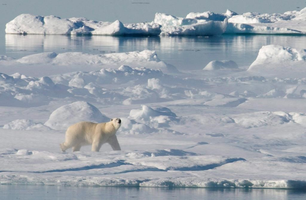 A polar bear stands on a ice flow in Baffin Bay above the arctic circle as seen from the Canadian Coast Guard icebreaker Louis S. St-Laurent on July 10, 2008.