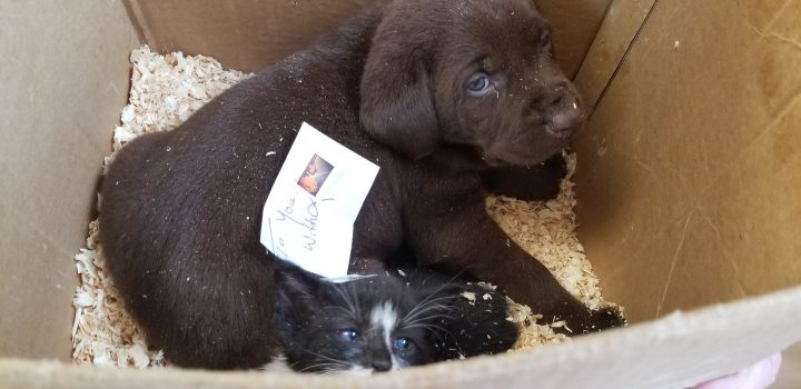 A person in Vulcan attempted to mail a dog and cat out of a Canada Post office in May 2019, according to Vulcan County Enforcement Services.
