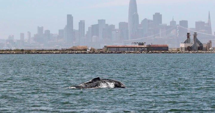 Under the sea: What coronavirus is doing to the world's marine mammals