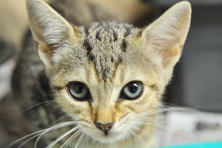A kitten is shown at the Dothan Animal Shelter in this photo posted on Facebook July 14, 2019.