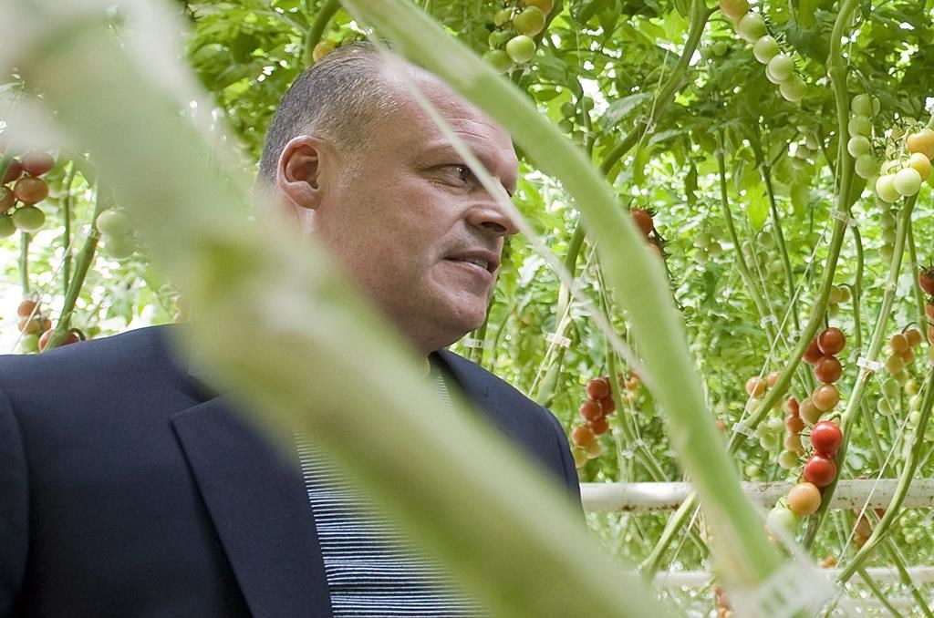 Biologico organic tomato greenhouse owner Stephane Roy is seen in Saint-Sophie, Que., on August 16, 2012.