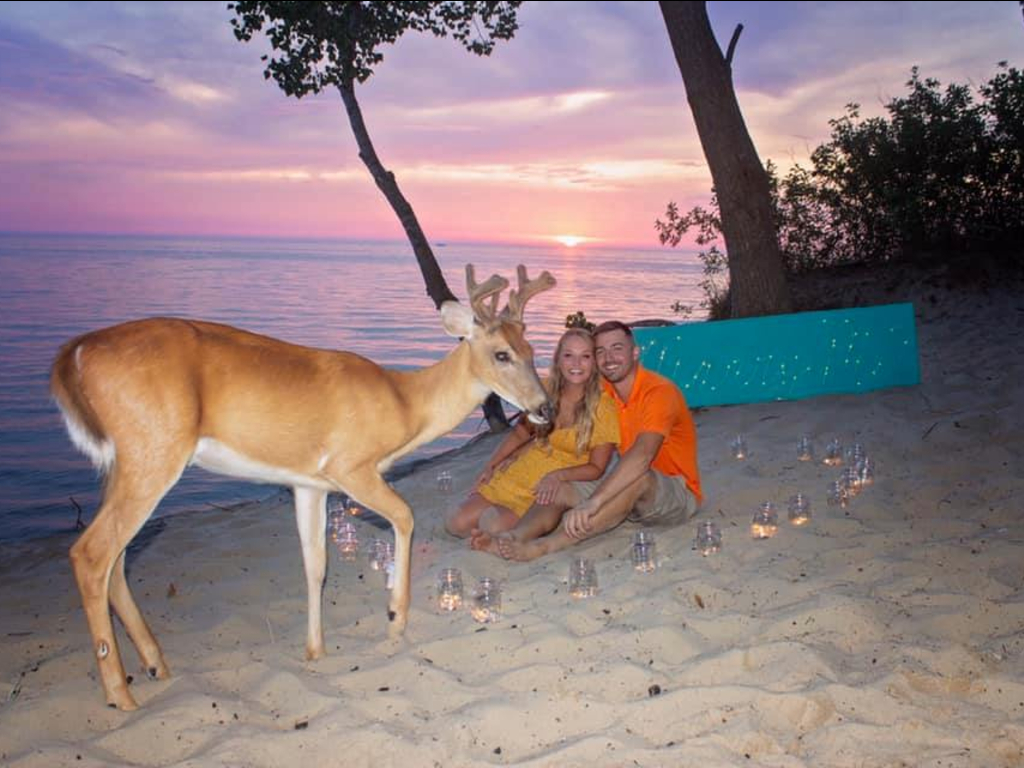 A deer made a surprise entrance during Jakob Lee and Colbie Wakeley's engagement photo shoot.