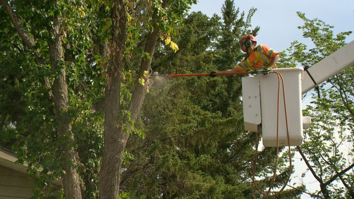 The City of Regina says the first case of Dutch elm disease in 2019 was discovered in a tree in a yard at 222 Lincoln Dr.