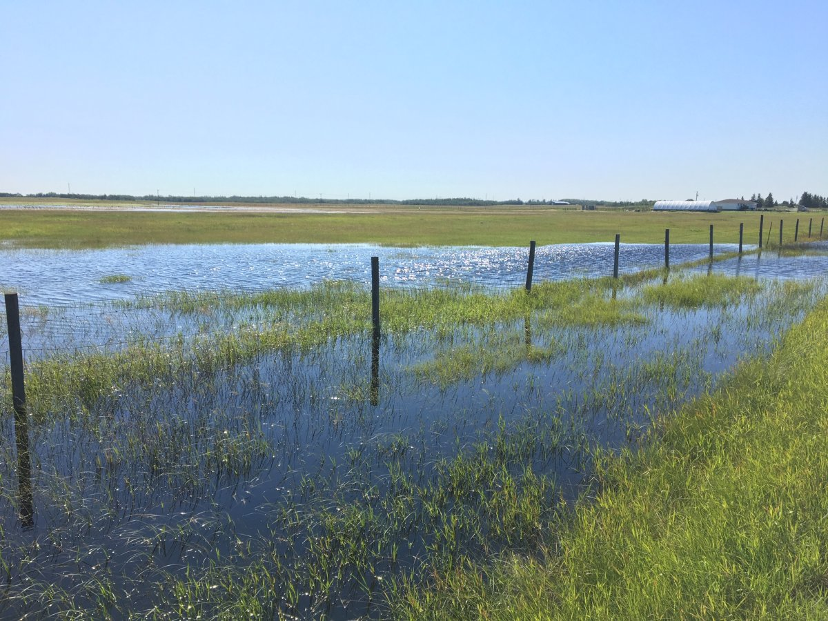 A flooded field in Leduc County, Alta. on July 22, 2019.