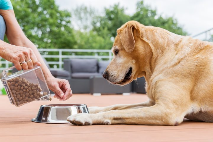 The U.S. FDA has linked certain types of dog food to increased heart disease.