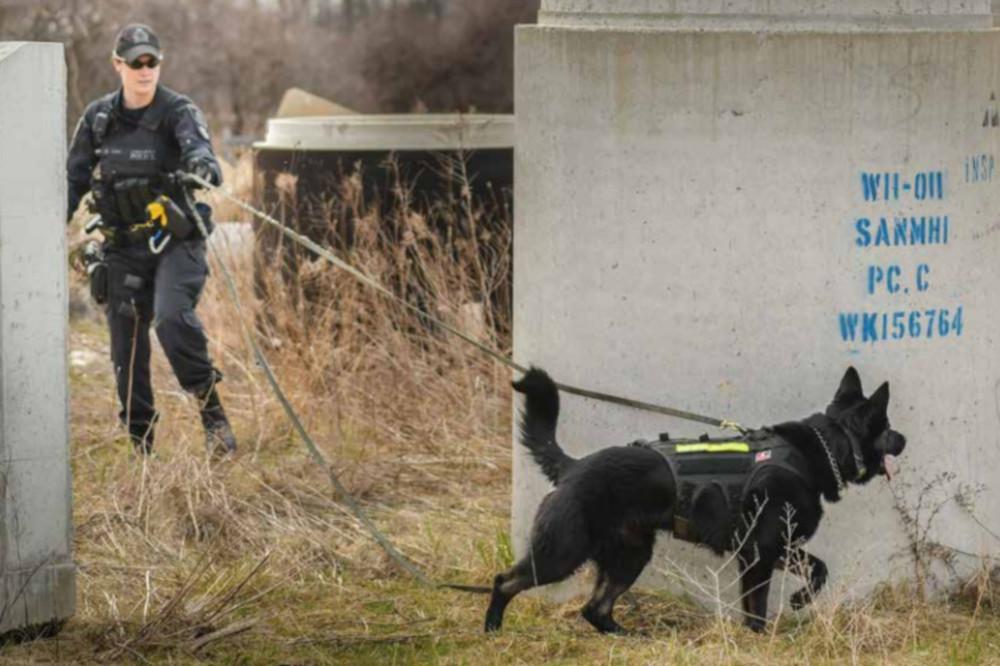 Waterloo Regional Police service dog Grim and his partner Const. Marrissa Zuliani.
