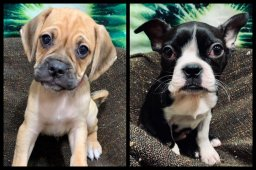 Continue reading: 2nd puppy stolen from Calgary pet store found abandoned in stolen vehicle