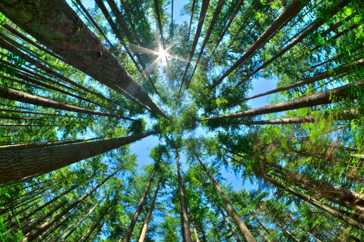 Published in the Science academic journal, the study claims that by covering an additional one billion hectares of the planet with trees, the process of global warming could be greatly slowed down.