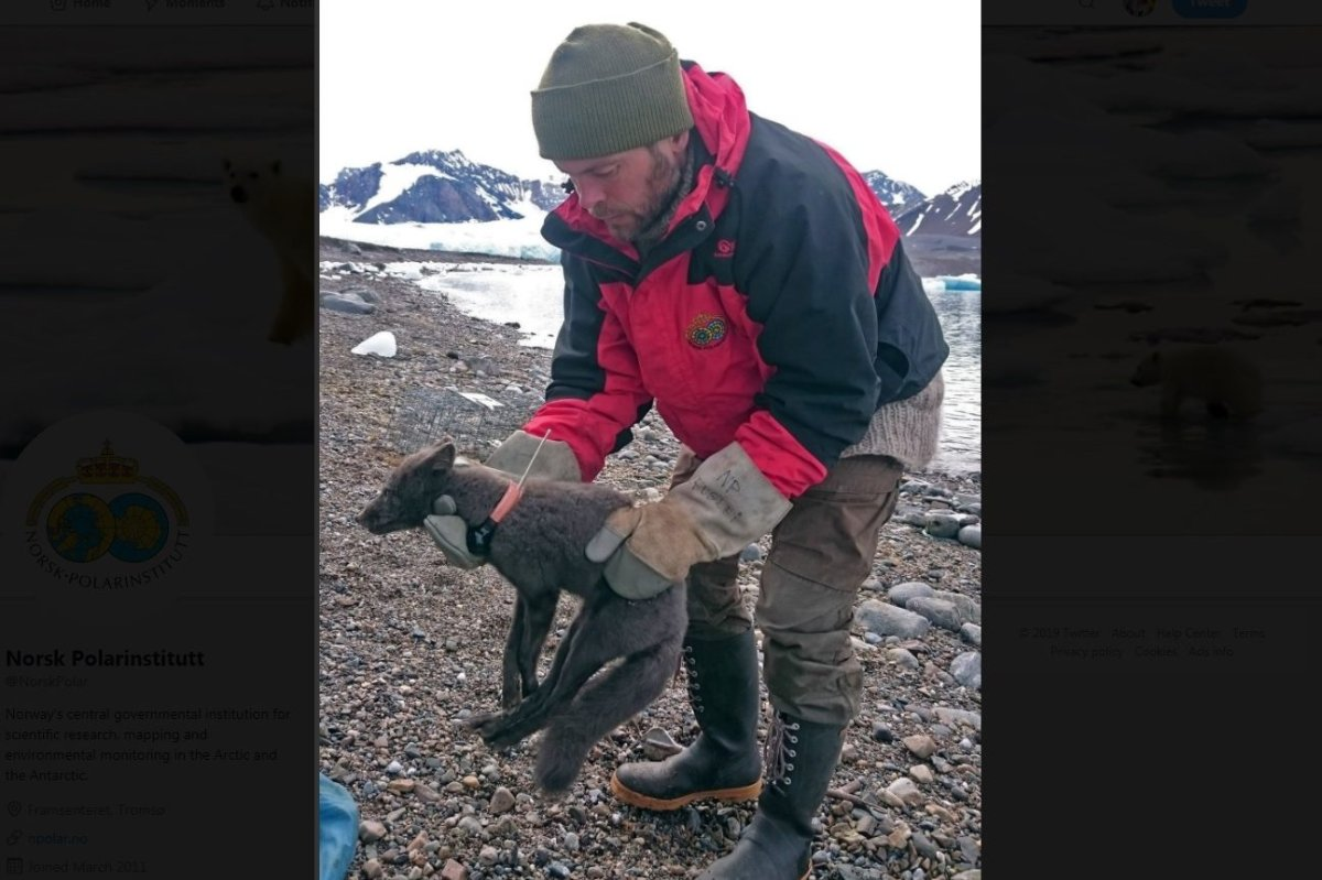 This Arctic fox migrated over sea ice from Norway to Canada at a pace scientists had not previously documented.