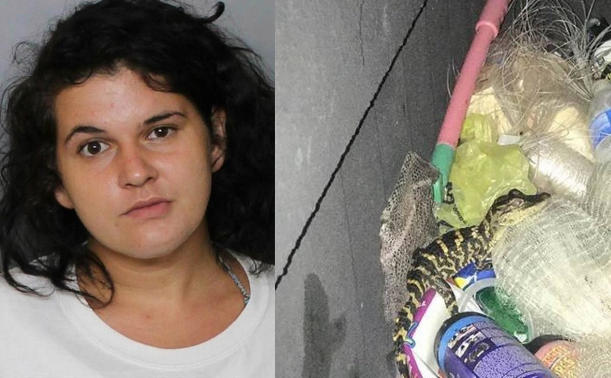 Ariel Machan-Le Quire plead guilty after pulling an alligator out of her pants.