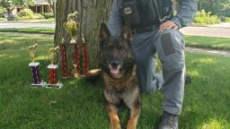 Continue reading: Guelph police dog Charger qualifies for National Police Dog Trials