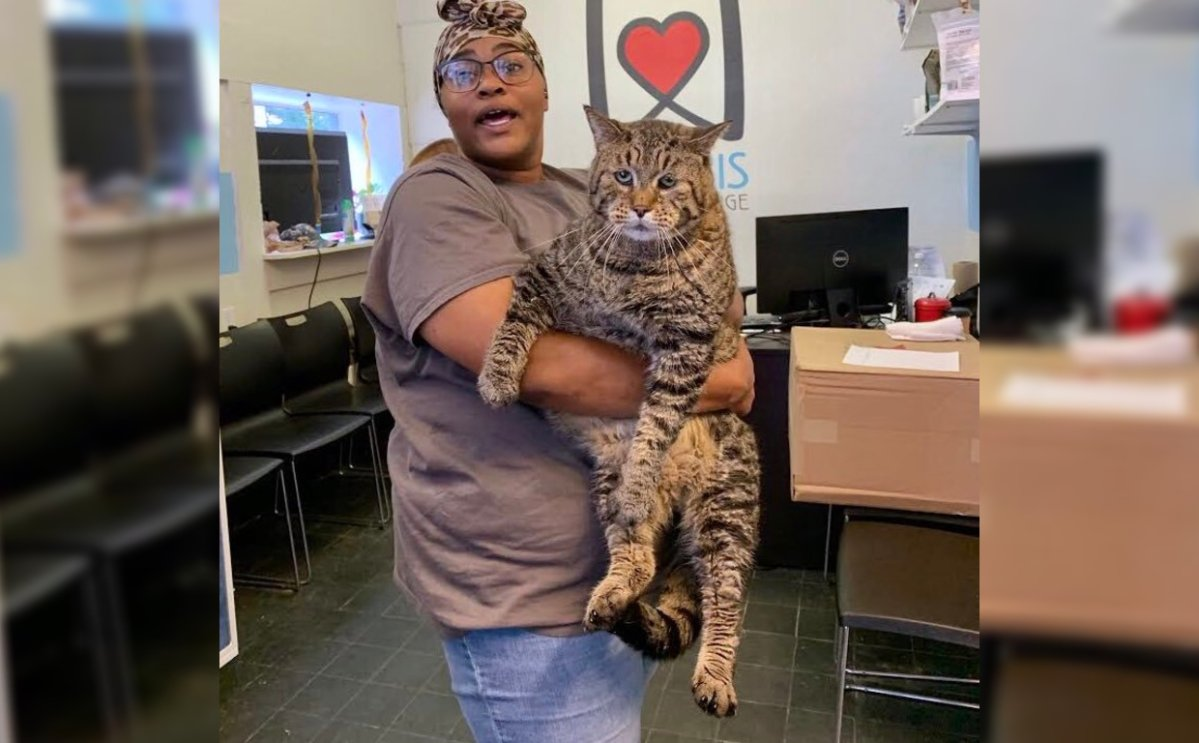 Beejay the 'chonky' cat weighs in at an astonishing 26 pounds.