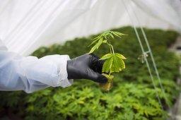 Continue reading: 2nd CannTrust marijuana facility deemed non-compliant by Health Canada