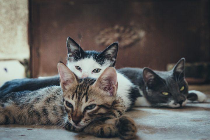 The cat population on Umashima Island in Japan has dwindled dramatically since 2014.