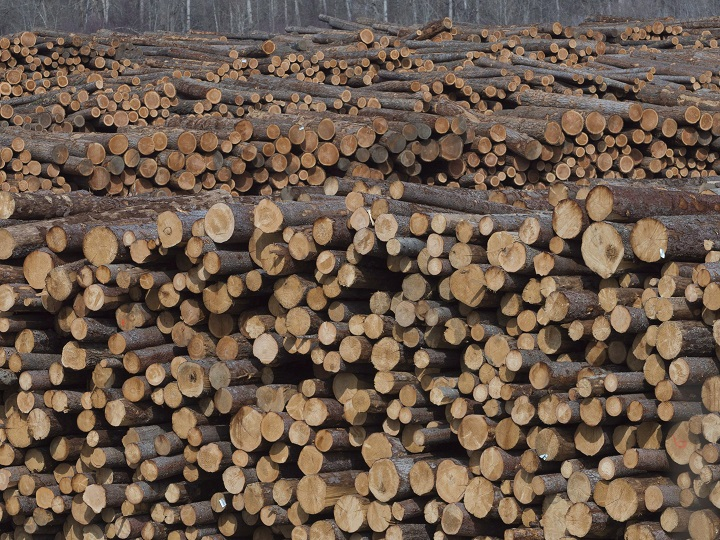 Logs waiting to be processed at Tolko Industries in Heffley Creek, B.C.