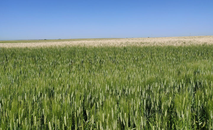 APAS said the announcement falls far short of the $2.6 billion identified by the Canadian Federation of Agriculture as the amount needed to avoid serious food insecurity and hardship to both farmers and consumers.
