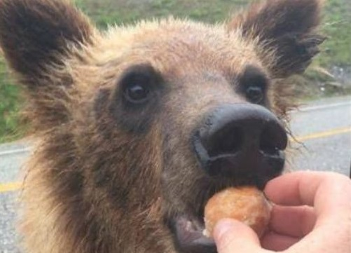 Randy Scott has been fined $2,000 and ordered to stay away from bears after posting a photo of him feeding Timbits to one of the animals.